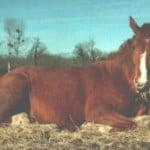 Les indicateurs du bien être du cheval et l'éthologie équine