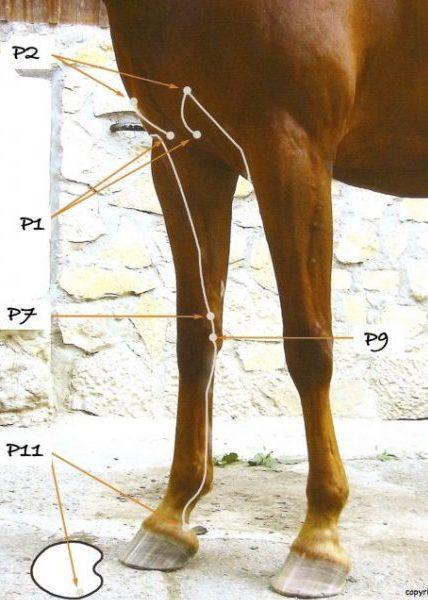 Fait mal le thorax rend au dos que cela