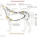 Mon cheval a mal au dos ou ailleurs ?